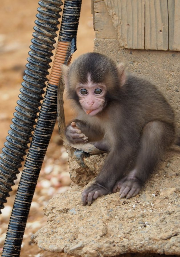 Monkey Forest - Things to do in Kyoto